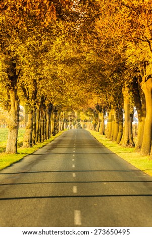 Road running through autumn fall tree alley. Beautiful autumnal landscape, orange foliage - stock photo