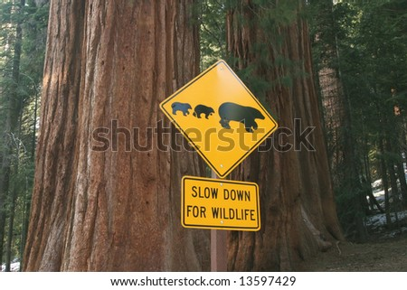 Road sign for bears on a huge Sequoia. Sequoia national park. California. USA - stock photo