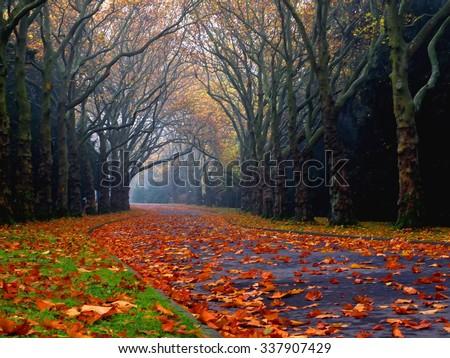 road through a beautiful park at autumn - stock photo