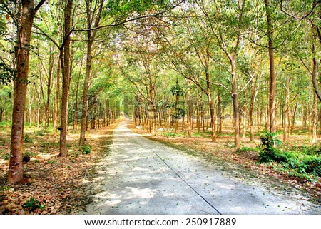 road through a beautiful piece of nature    - stock photo