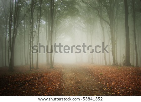 road through a colorful misty forest - stock photo