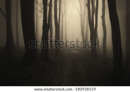 road through a fantasy forest - stock photo