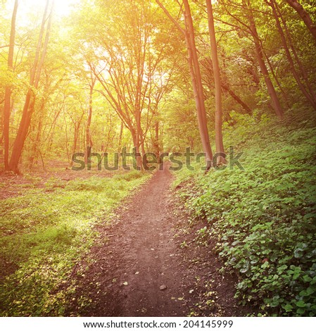 Road through a forest at summer