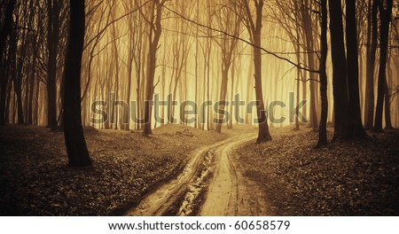 road through a forest with black trees and fog in late autumn - stock photo