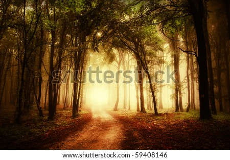 road through a golden forest at autumn - stock photo