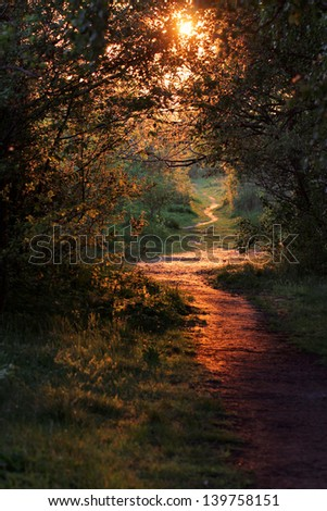 road through a golden forest at sunset - stock photo