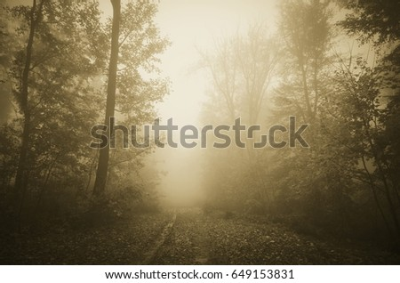 road through autumn forest on rainy day with trees in fog