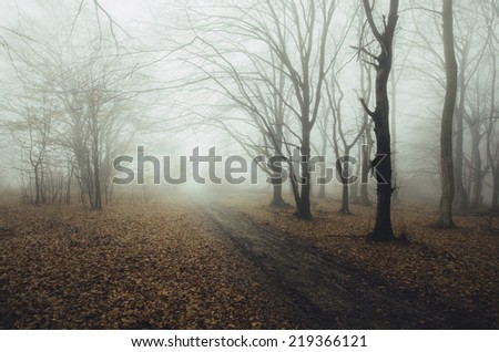road through autumn forest with leaves on the ground after rain - stock photo