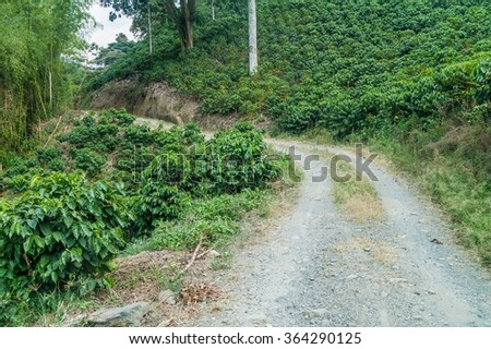 Road through coffee plantations near Manizales, Colombia