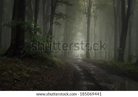 road through dark green forest after rain - stock photo