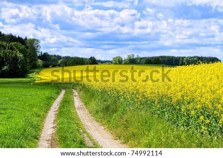 Road through flowering canola fields in Germany - stock photo