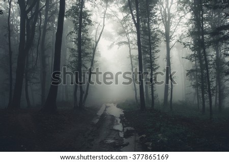 road through forest after rain - stock photo