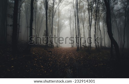 road through forest in autumn - stock photo