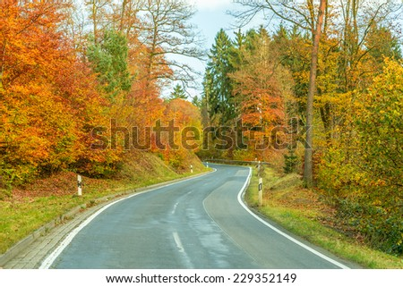 Road through forest showing the wonderful colours of autumn