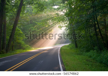 Road through forest with light beams and sun rays through green trees - stock photo