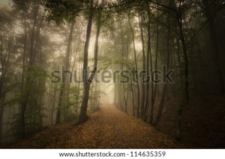 road through green forest - stock photo