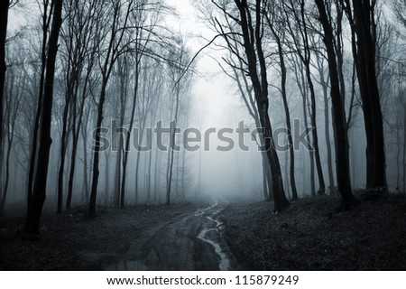 road through misty forest - stock photo