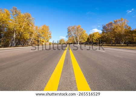 road through the birch forest in autumn - stock photo