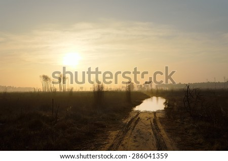 road through the burned woods at sunset - stock photo