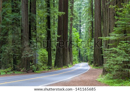 Road Through The California Coastal Redwood Forest - stock photo