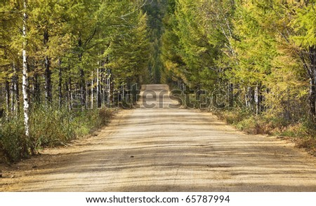 road through the forest in the northeast of china - stock photo