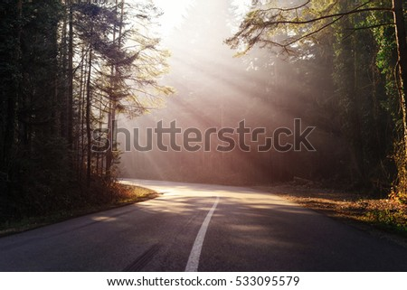 road through the forest with sunlight that penetrate through the trees