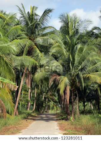 Road through the palm grove on a sunny day
