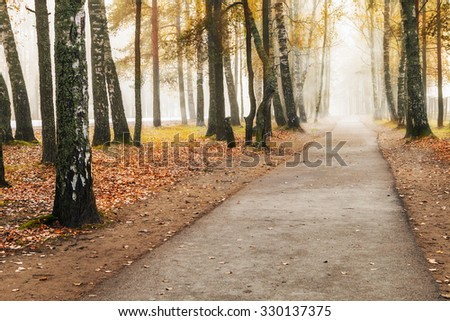 road through the park in a foggy autumn forest - stock photo