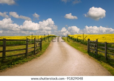 Road through the raps field in a sunny day - stock photo