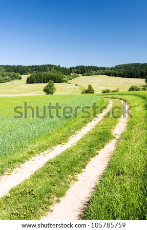 Road through the spring/summer countryside