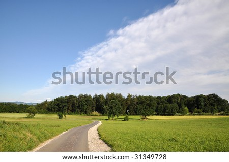 Road through the sunny spring landscape
