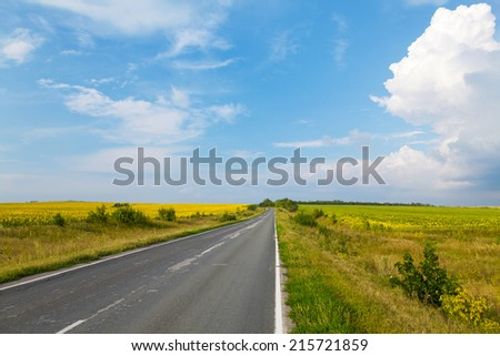 Road through the yellow sunflower field in sunny day