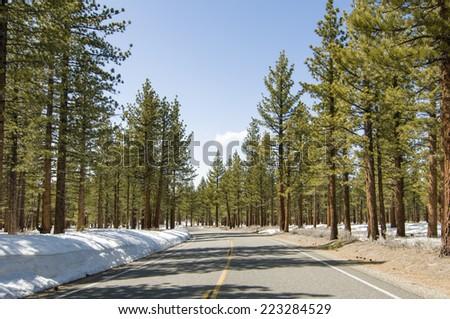 Road through winter forest near Mono Lake, California - stock photo