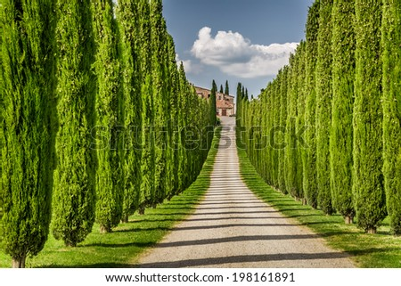 Road to agritourism in Tuscany between cypresses - stock photo
