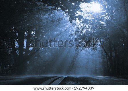 Road to foggy morning with visible sun beams - stock photo