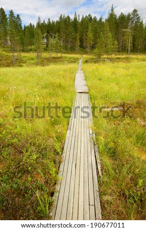 Road to house through swamp (focus on track) - stock photo