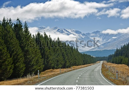 Road to Mt Cook along with pine trees - stock photo