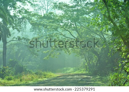 Road to Tabin Wildlife & Forest Reserve, Sabah Borneo, Malaysia.  Tropical rainforest with a magical morning light. - stock photo
