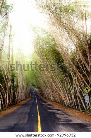 Road to the nature on the mountain,Thailand. - stock photo