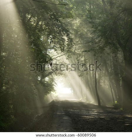 Road to the park and the rays are visible through the fog - stock photo