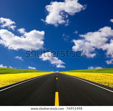 Road traveling through a Canola Field - stock photo