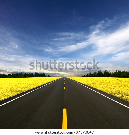 Road travelling through a Canola Field - stock photo