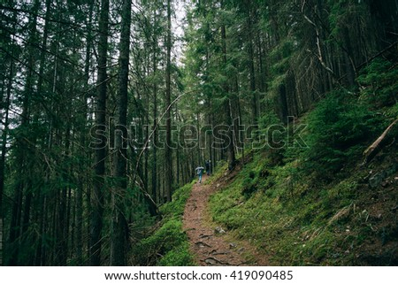 Road trek into the mountains for hiking. Green Forest.  Misty mountain pine forest  landscape.