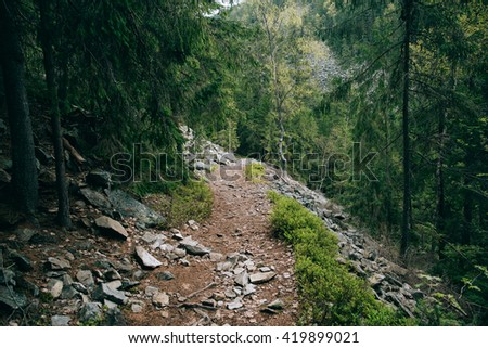 Road trek into the mountains for hiking. Green Forest. Misty mountain pine forest landscape