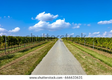 Road trought the vineayrd