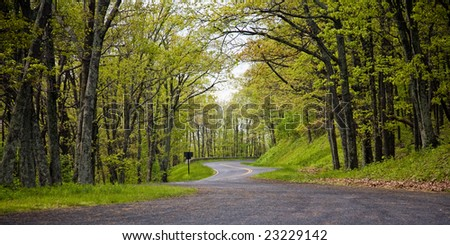 Road turning among trees with light green leaves in the spring forest of the Shenandoah National Park, Virginia, USA. - stock photo