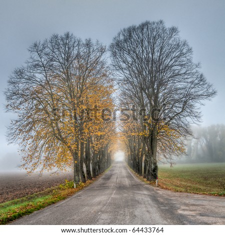 Road with avenue of trees on misty Autumn morning - stock photo