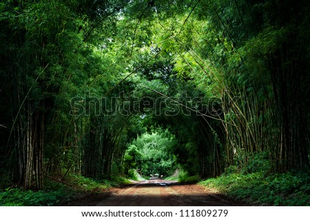 Road with Bamboo - stock photo