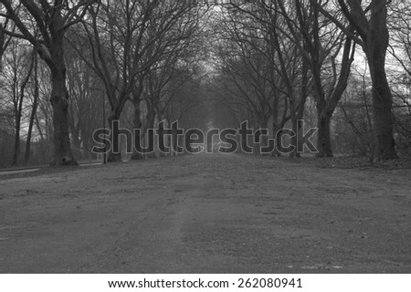 road with big trees black and white - stock photo