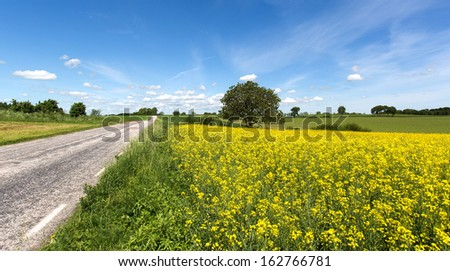 Road with canola field
